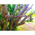 木も看板になっちゃう南国バリ島.さぁ、みなさんバリ島でのんびり休暇をすごしませんか